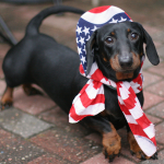 star spangled dachshund