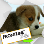 frontline doggy