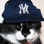 NY Kitty